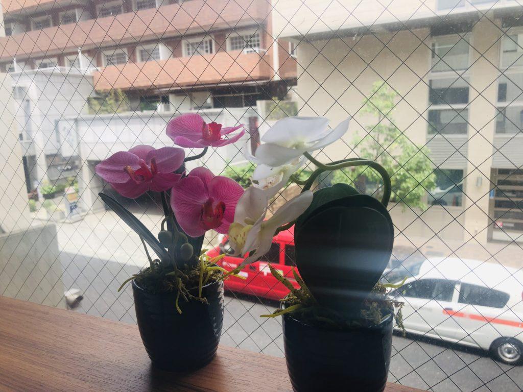 窓際のお花